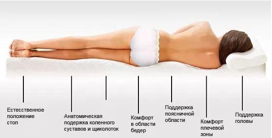 Распределение веса тела согласно анатомическому строению человека.